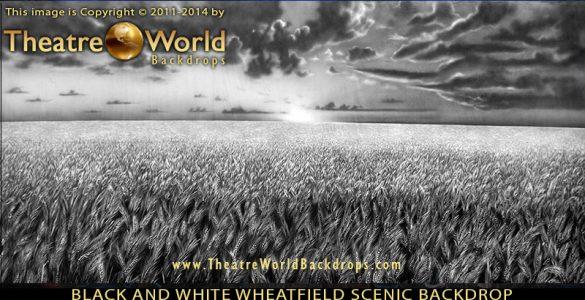 Professional Scenic Backdrop Black and White Wheat Field