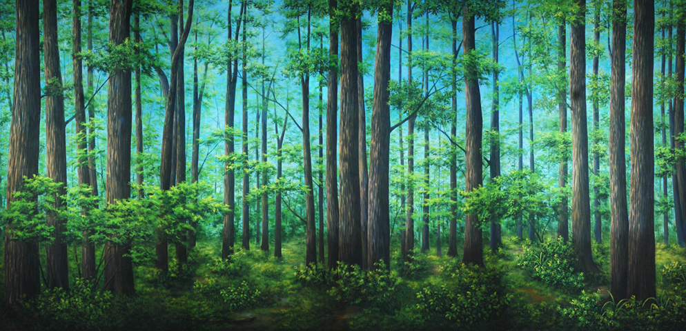 Professional Cinderella Tranquil Woods Scenic Backdrop